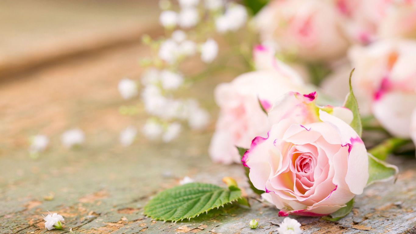 Skachat Oboi Derevo Sakura Cvetenie Vesna Park Razdel Priroda
