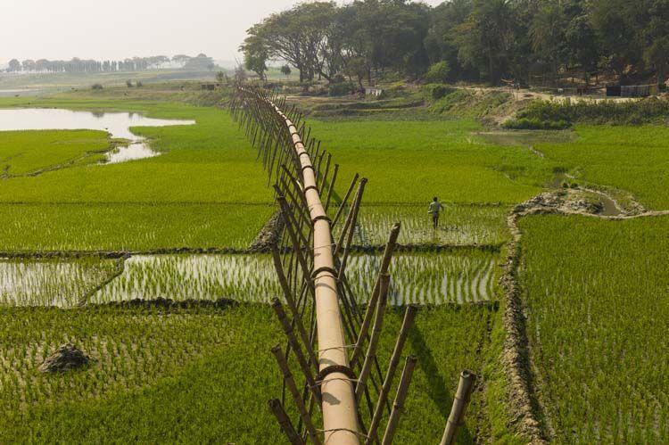 bangladesh bamboo - Google-søk