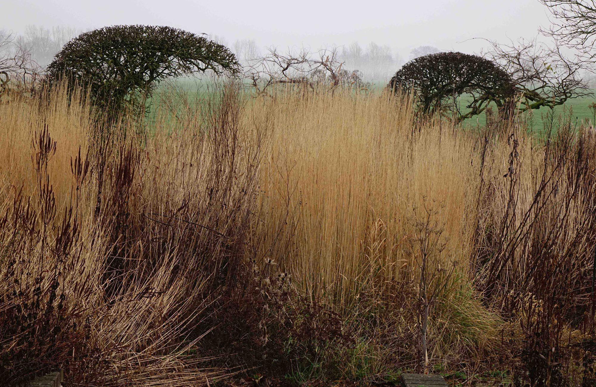 Piet Oudolf » Oudolf Hummelo   Garden green   Pinterest   Gardens ...