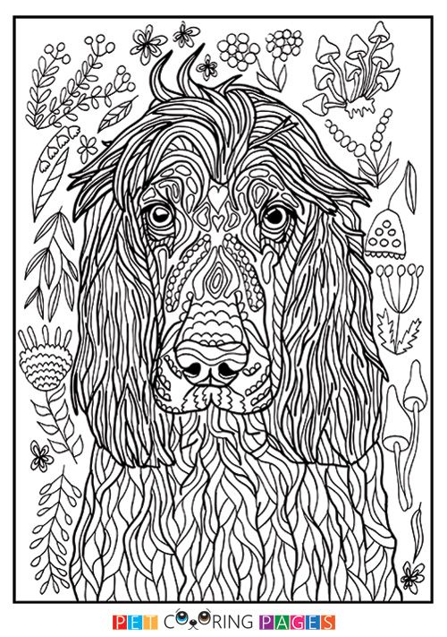 english springer spaniel coloring pages - photo#26