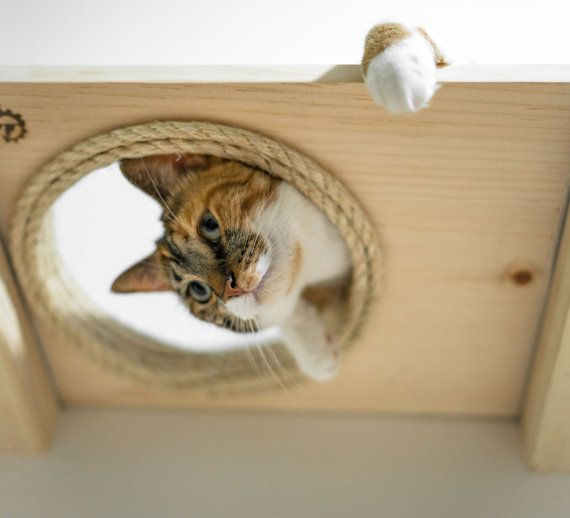 Etsy の The Cat Mod Escape Hatch by CatastrophiCreations