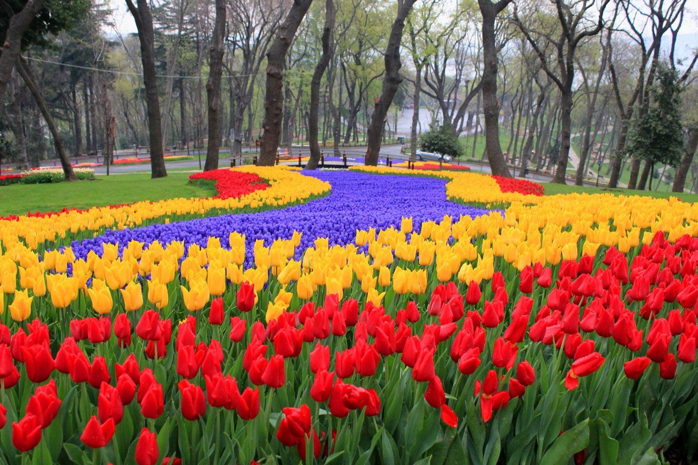 traveling ke 5 negara ini kamu bisa menikmati indahnya kebun tulip rh travelingyuk com