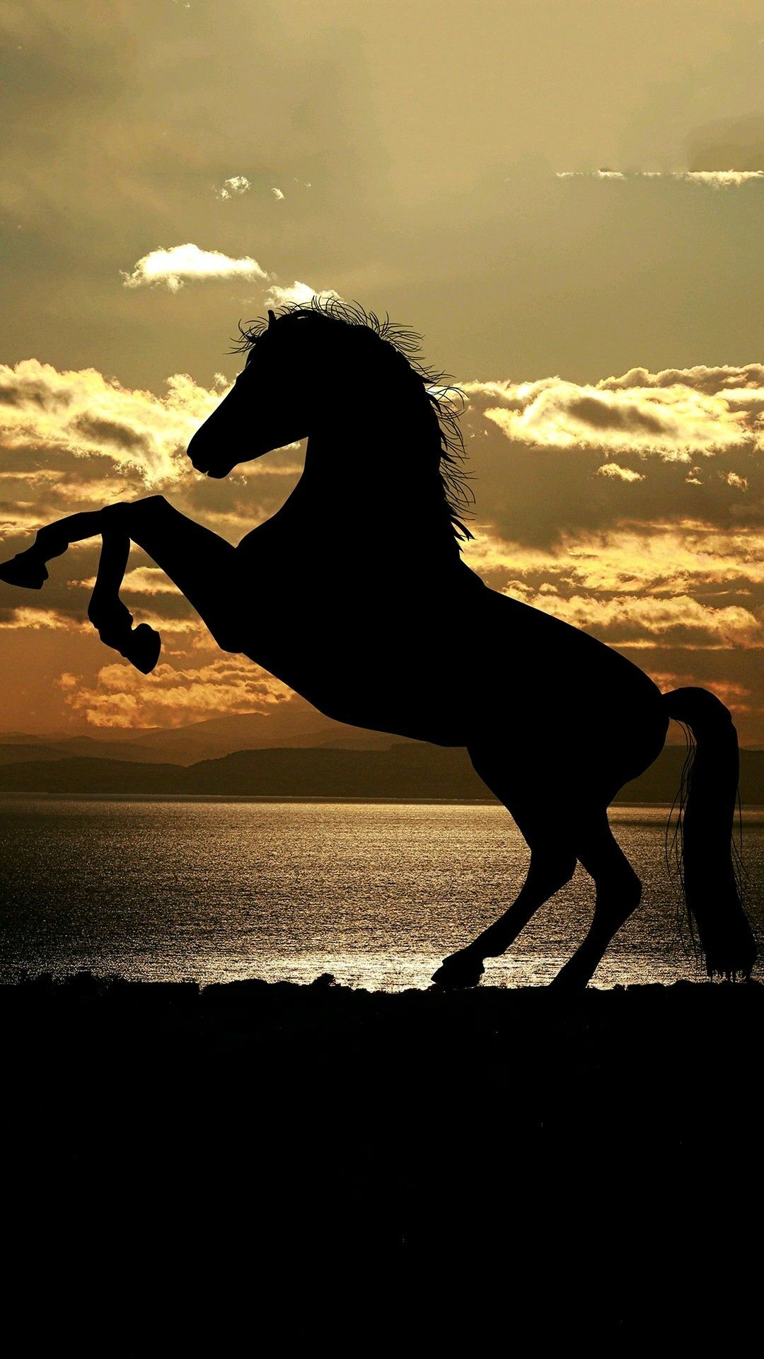 Shadow Of A Horse Wallpaper Horse Wallpaper Horse Background Horse Senior Pictures