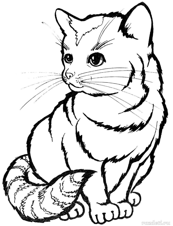 раскраски котиков распечатайте бесплатно у нас раскраски