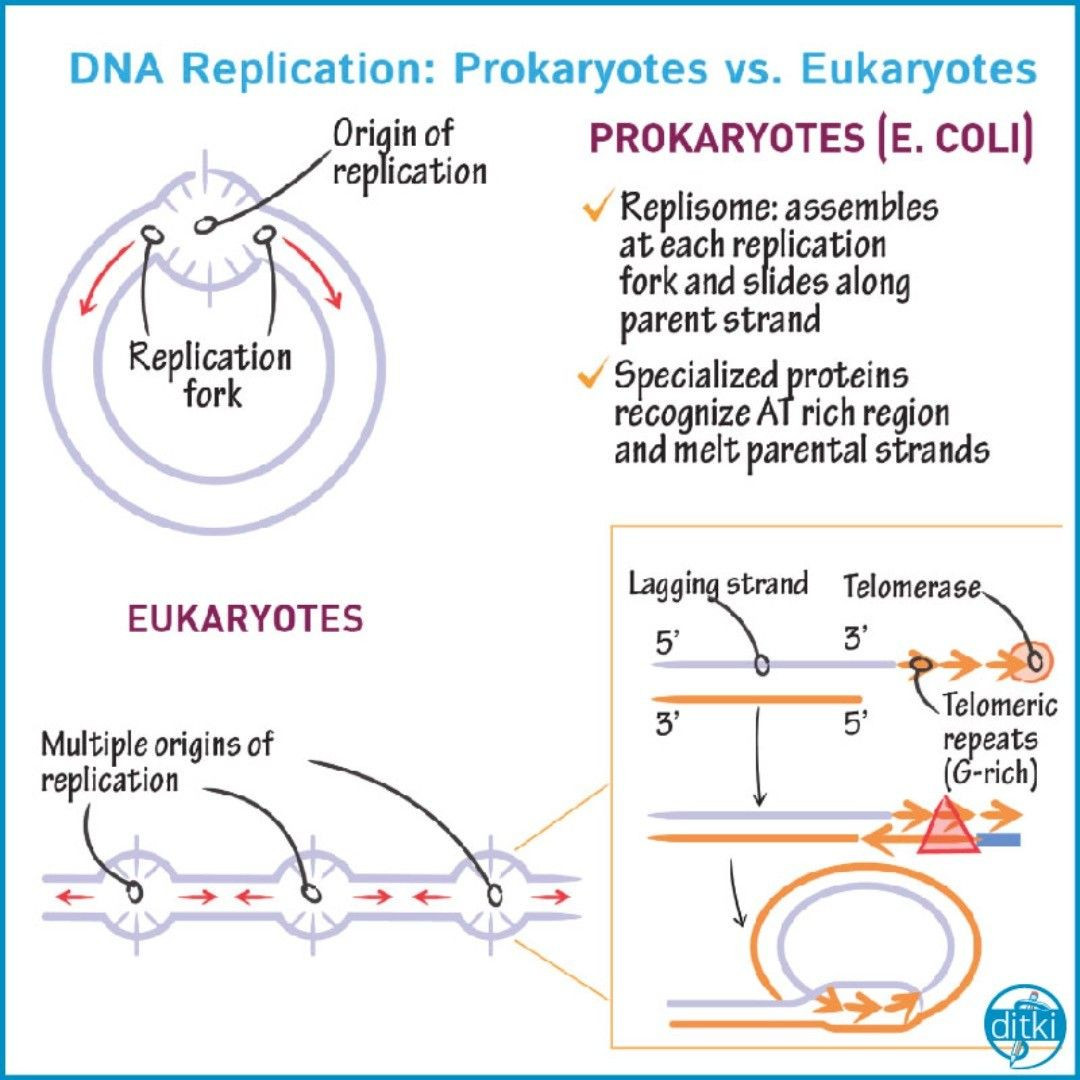 Click the Link in our Bio to Review DNA replication and