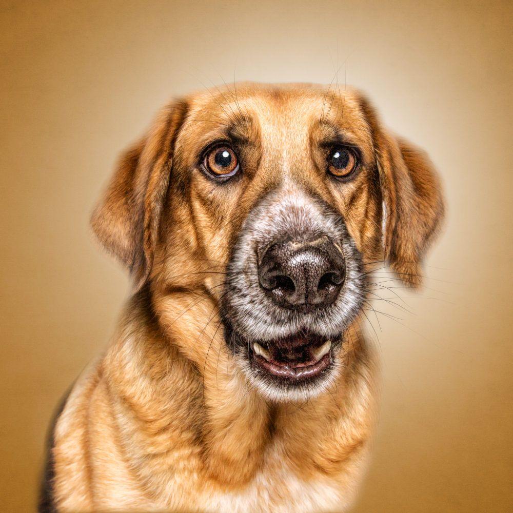Medium Of Funny Dog Faces