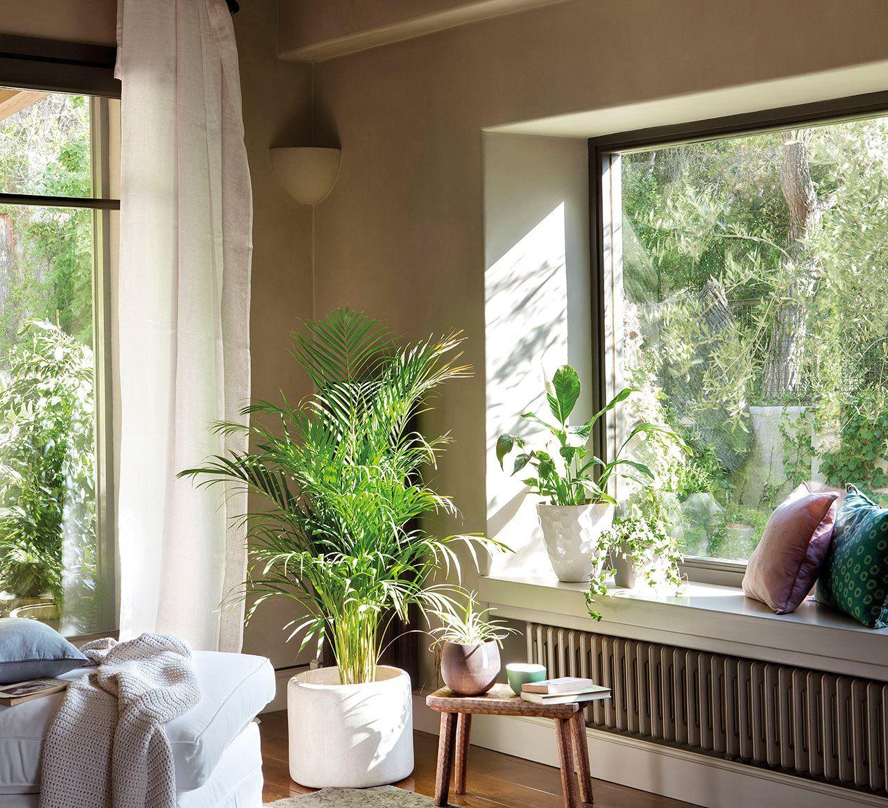 Decora con plantas y gana salud y vida - Cuanto gana un disenador de interiores ...