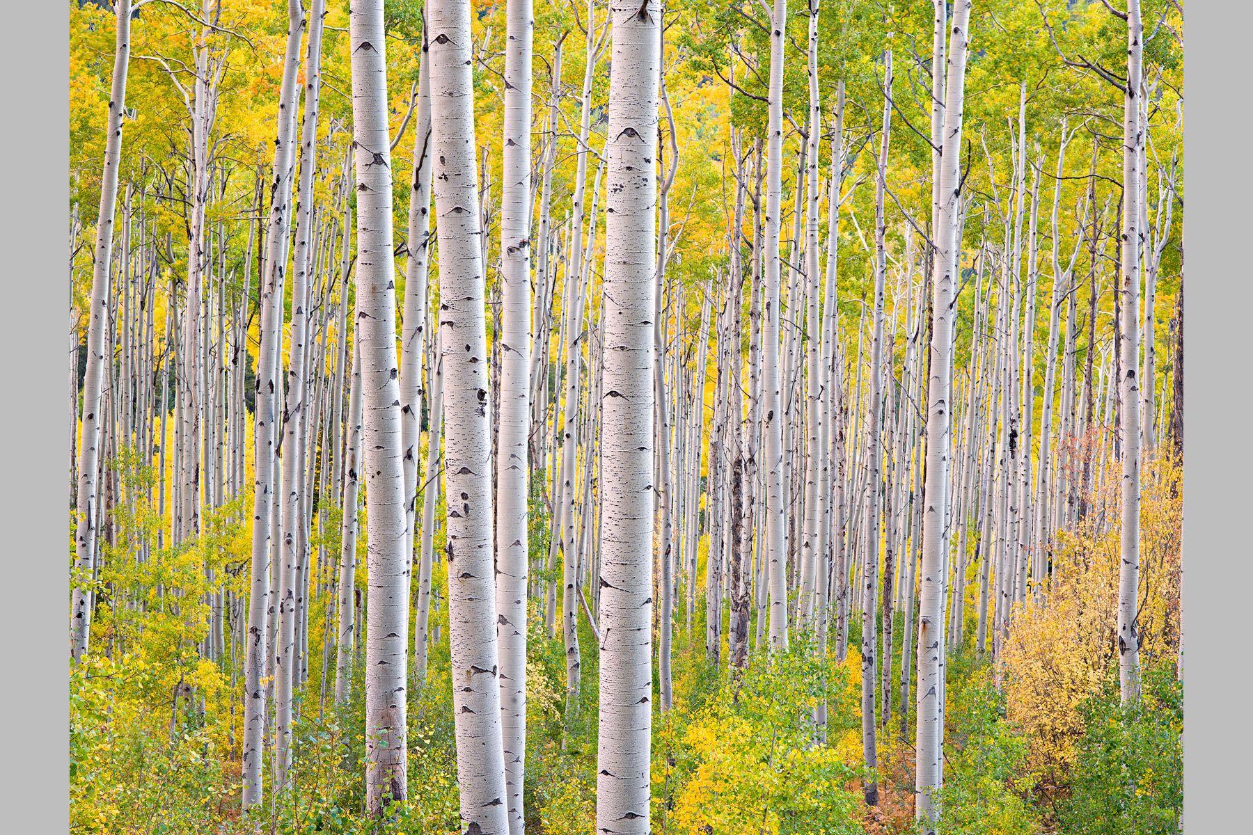 Steven Friedman Landscape Photography | Steven's Favourites - Steven Friedman Landscape Photography
