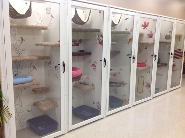 Great Option For Smaller Temporary Stay Rooms Dog Boarding Facility Cat Kennel Cat Room