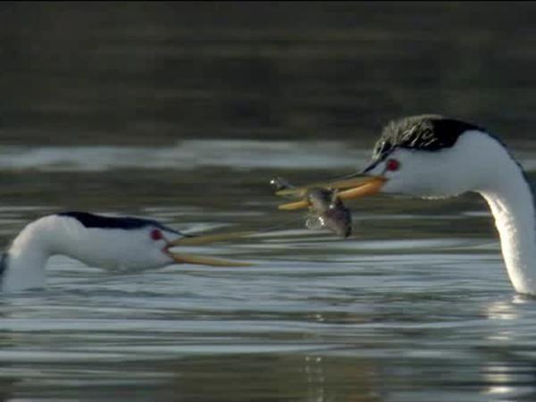 Sharing fish