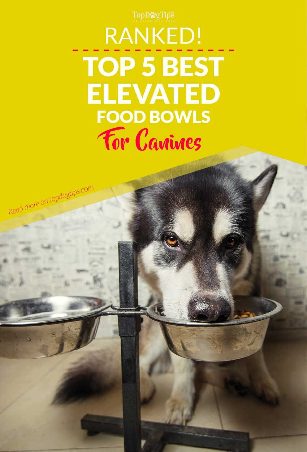 5 Best Raised Dog Food Bowls for Senior Dogs or Messy