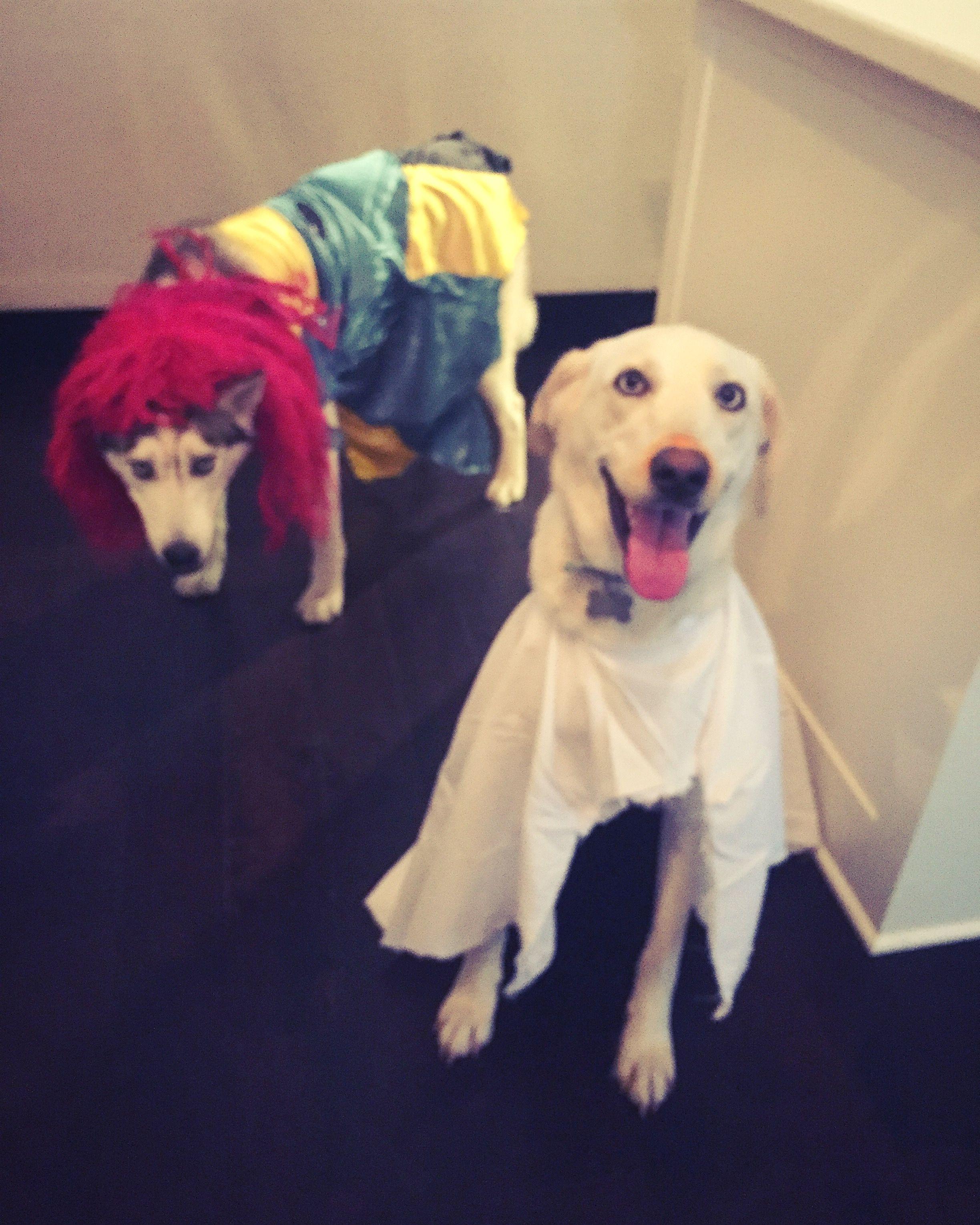 Zero And Sally Dog Costumes Zero Dog Costume Dog Costume Dog
