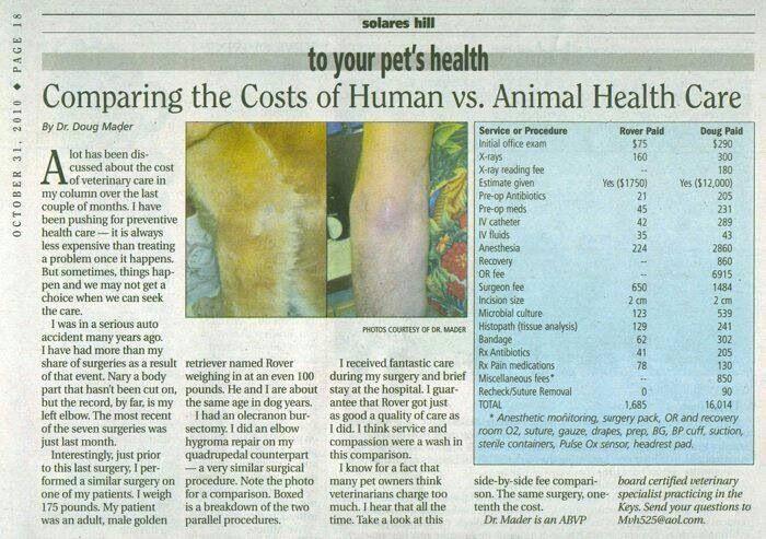 Pin by Kathleen Day Dunbar on Veterinary Training