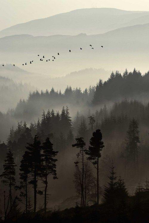 Mañana brumosa y pájaros migrando