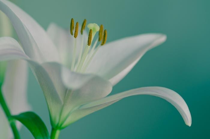 Green Note by Yasuhito Shinagawa