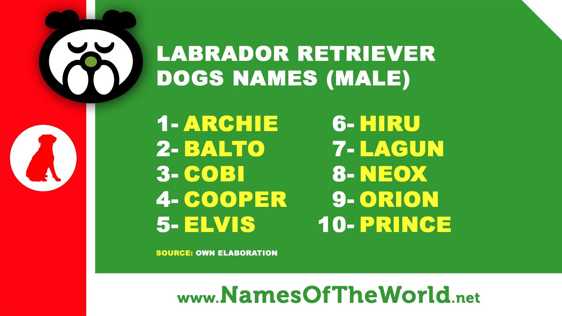 Male Names For Labrador Dog Dog Names Pet Names Male Pet Names