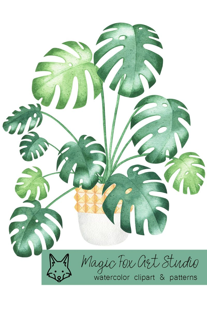 House Plant Clipart Greenery Clipart For Plant Lover Gift Watercolor Potted Plant For Plant Mom Png Sublimation Plant Lover Gift Clip Art Watercolor Plants