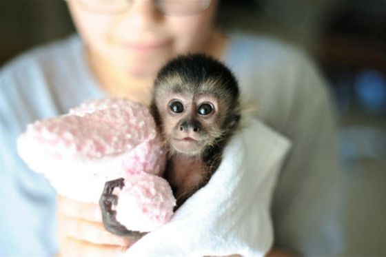 Can You Stand It Animals Pet Monkey Cute Animal Pictures