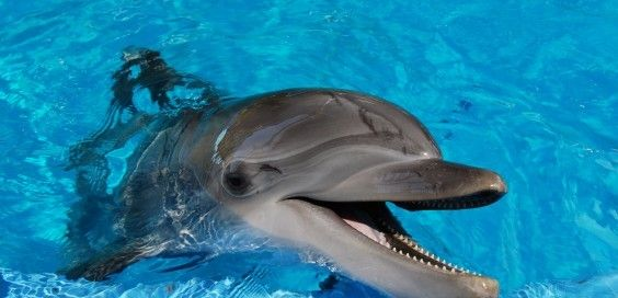 Did You Know Dolphins Have Very Delicate Skin And It Can Easily Be Damaged By Contact With Other Surfaces But Like Dolphin Facts Baby Dolphins Dolphins