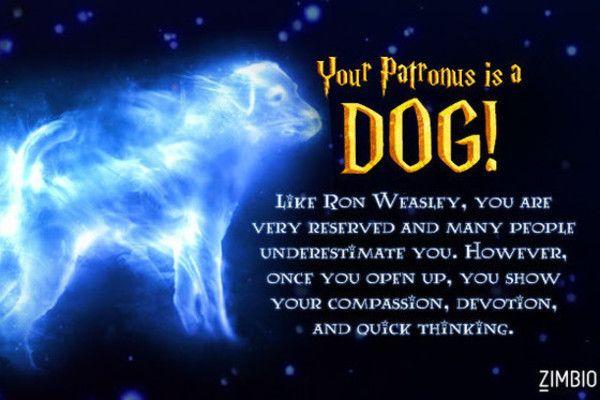This Rapid Fire Quiz Will Determine Your True Patronus Harry Potter Patronus Harry Potter Quiz Harry Potter Quizzes