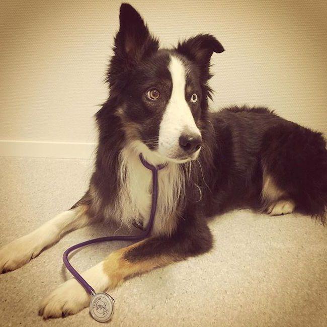 Pin on Pet Health