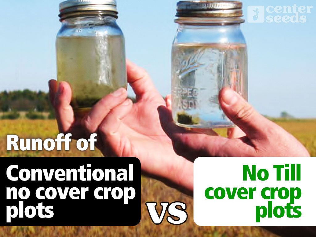 Cover Crops Help Clean Up The Waterways Tile Lines