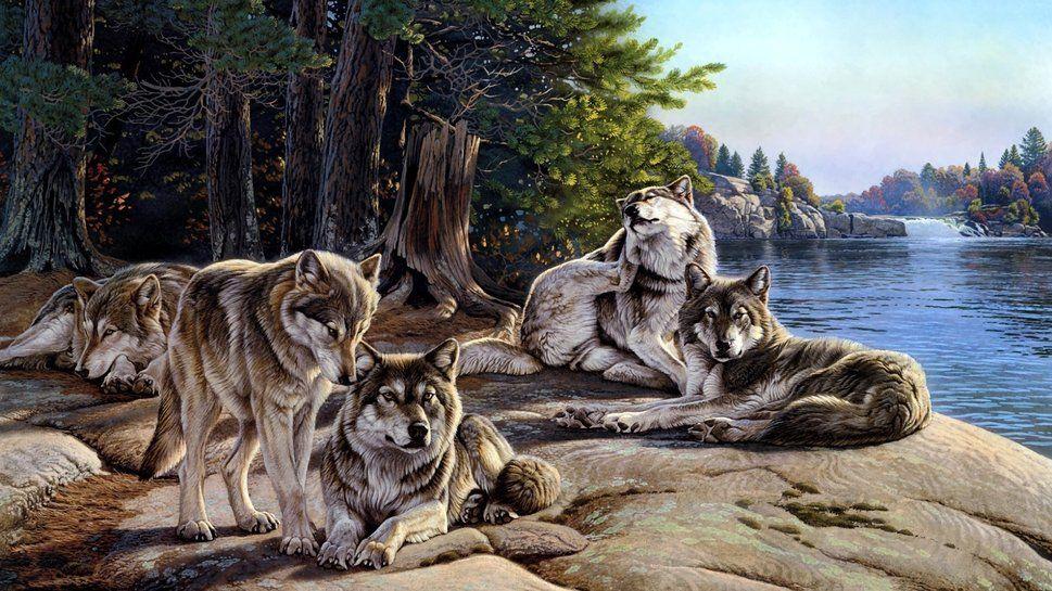 Manada De Lobos Descansando Linda Pintura Woolf Wallpaper Lobos