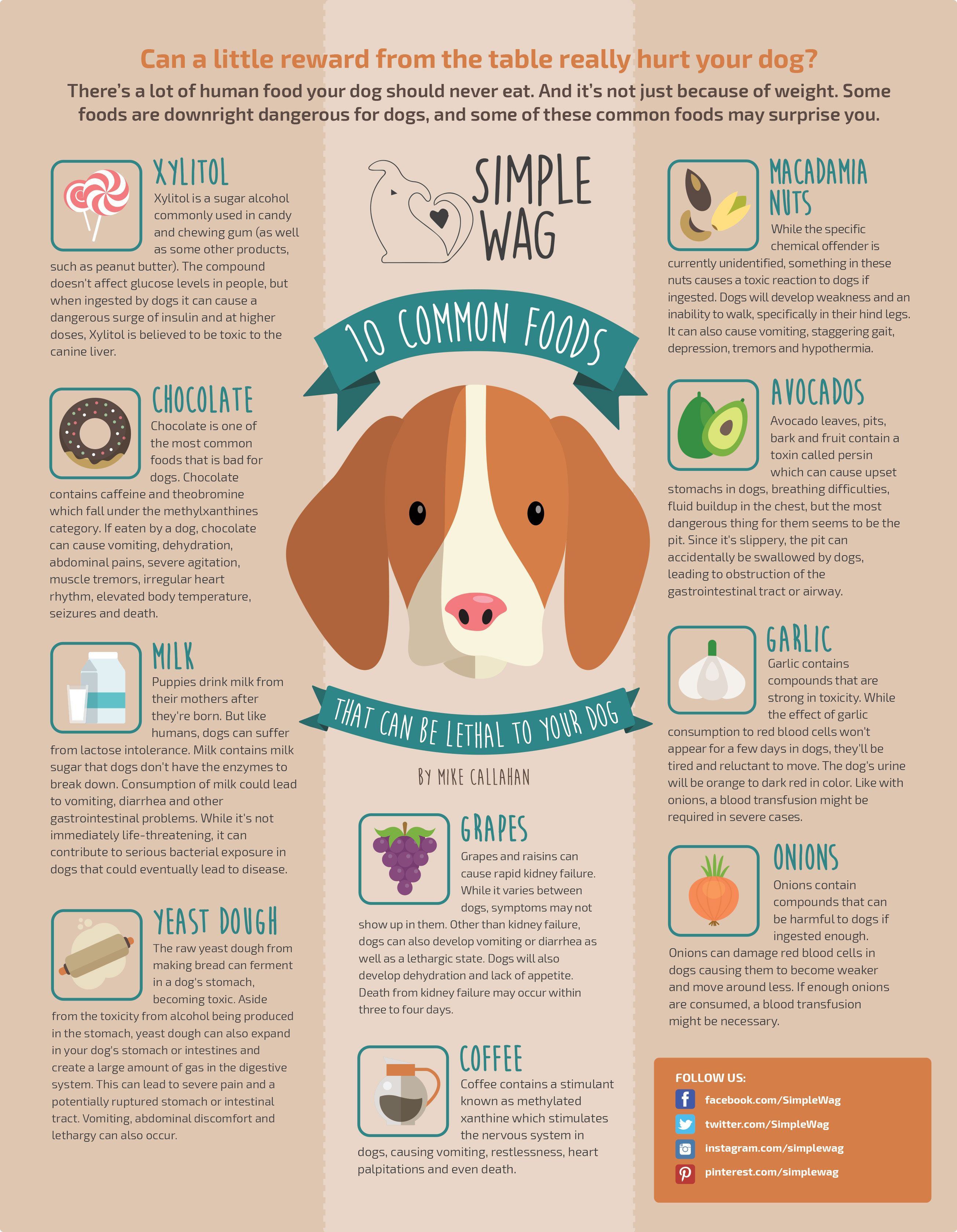 Toxic Foods For Dogs Toxic Foods For Dogs Toxic Foods Dog Food