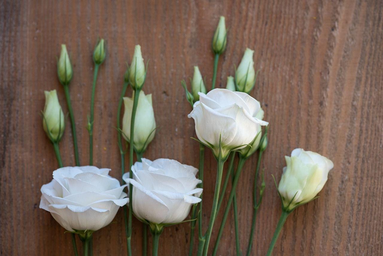 Lisianthus, Цветок, Цвести, Белый, Белый Цветок