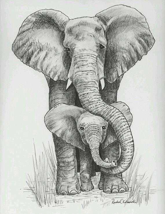 Elefante bebe y mama (grafito) | Elefantes | Pinterest | 絵 ...