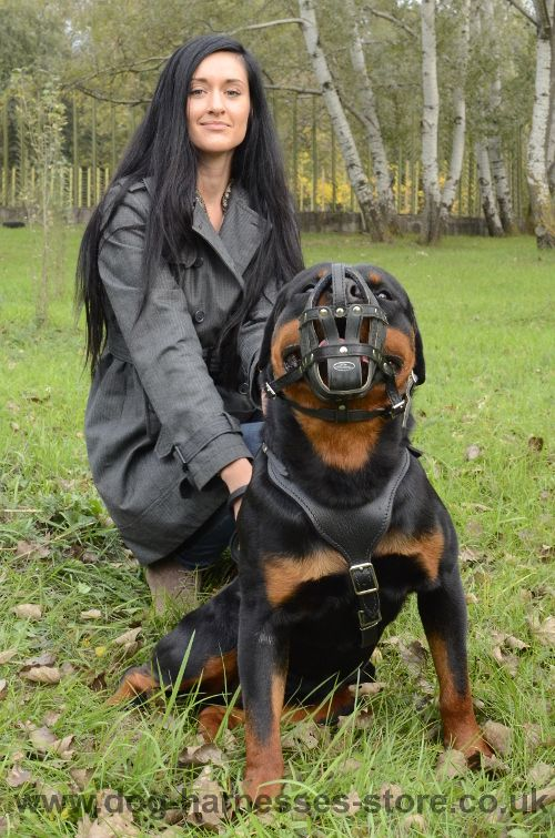 Leather Soft Dog Muzzle Uk Rottweiler Dogmuzzle Doggear Dogsupplies Dogaccessories
