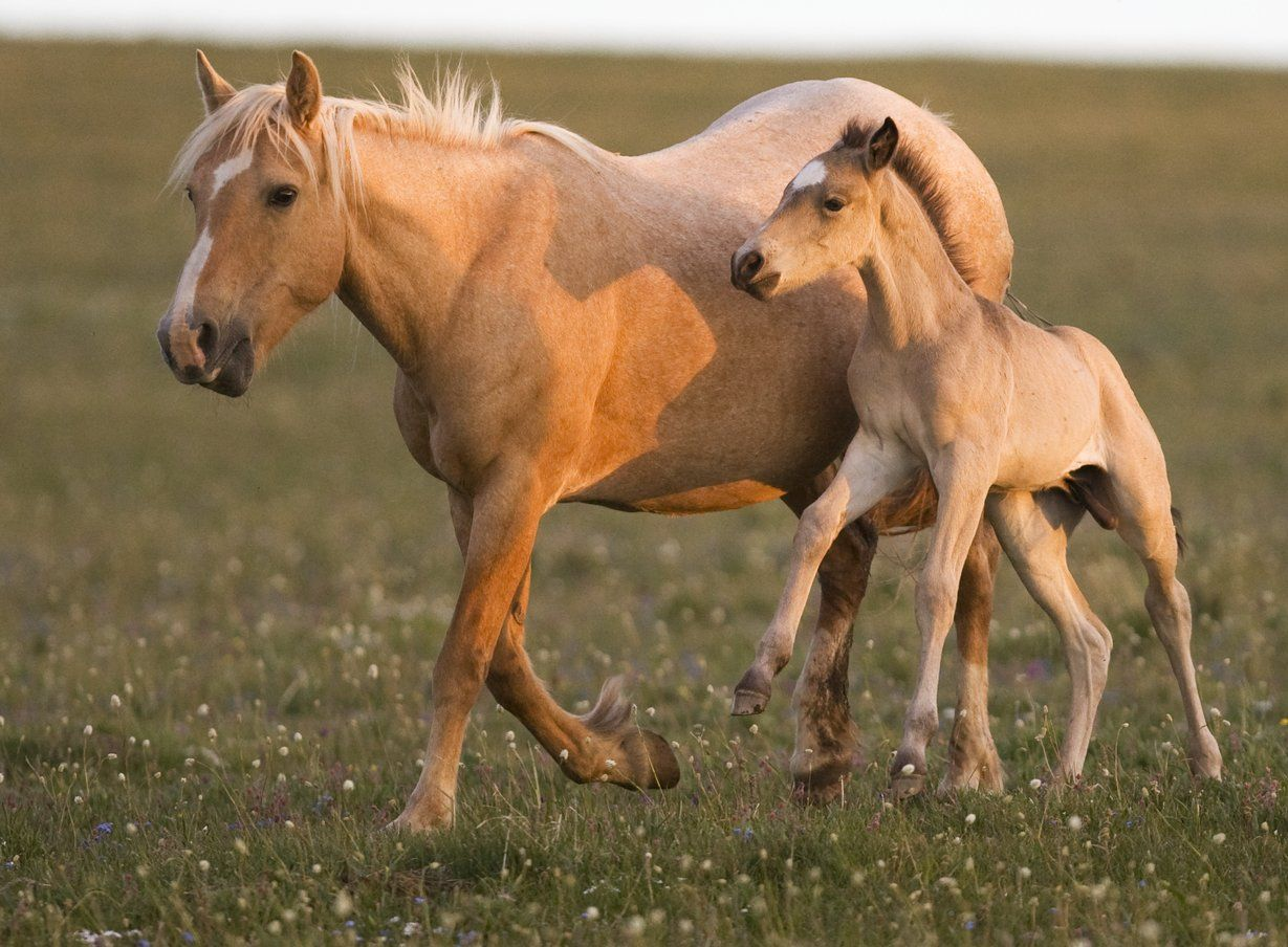 Wild Mustangs Burros And Pro Horse Advocates Care2 Groups Beautiful Horses Wild Wild Animals Pictures Horses