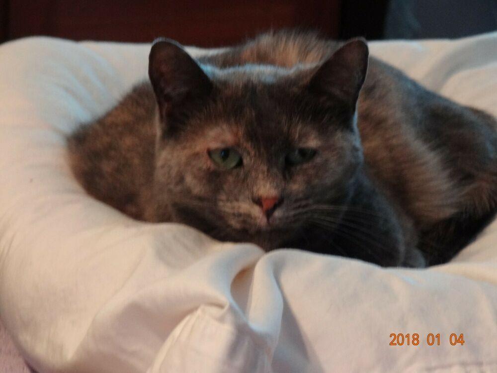 Sponsor Memory Of Butterbean Rainbow Bridge Cat Rescue Charity Donate Rec Photo Cat Rainbow Bridge Cat Cat Rescue Rainbow Bridge