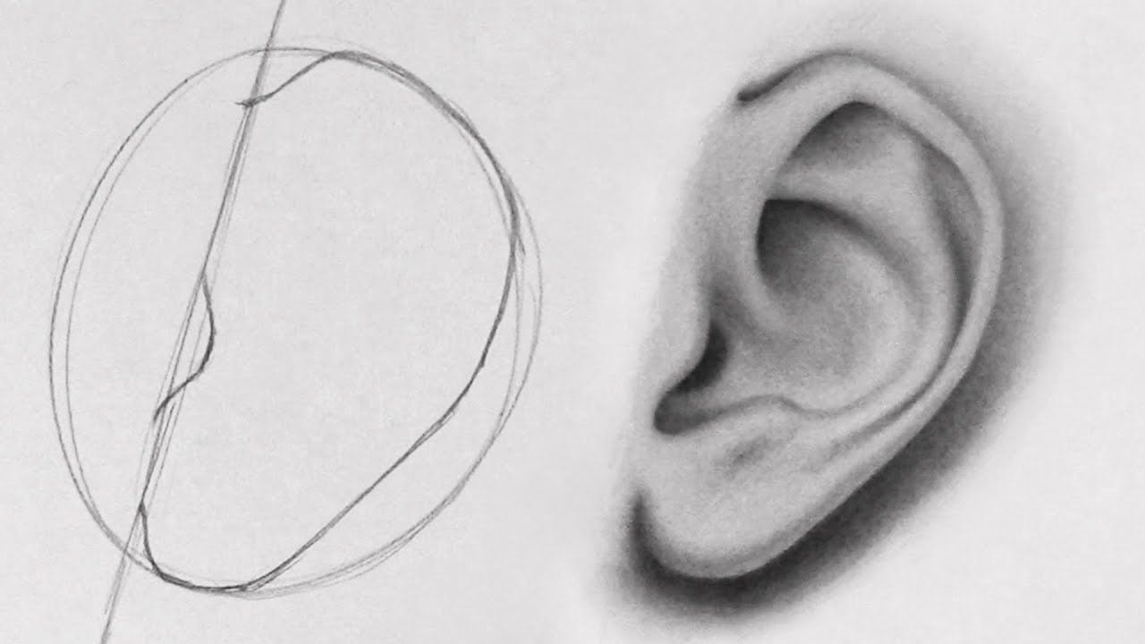 How To Draw Ears Side View Very Useful Because She Names And Describes The Parts Of The Ear In 2020 How To Draw Ears Lips Drawing Nose Drawing