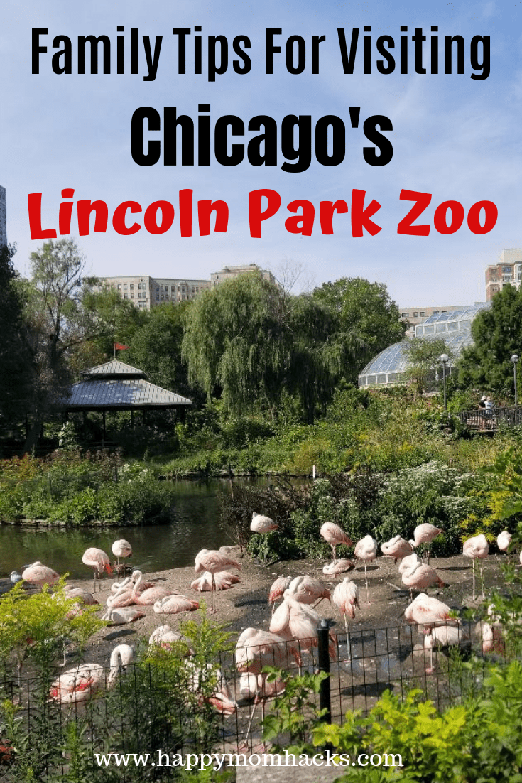 Lincoln Park Zoo Chicago Parking Hours Map Zoo Lights Happy Mom Hacks Lincoln Park Zoo Lincoln Park Zoo Chicago Family Travel Destinations