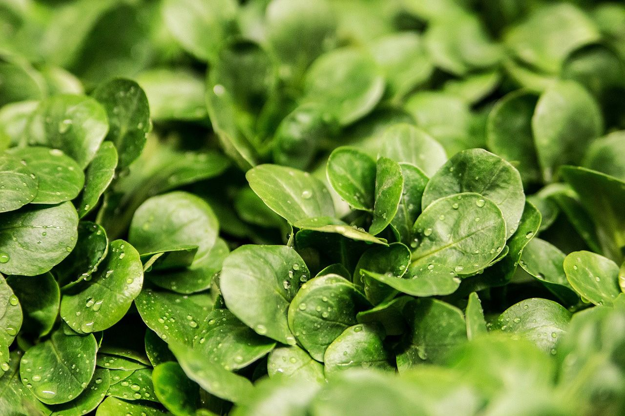 """Make dark, leafy greens a regular part of your diet! Do it! They """"taste healthy"""" because they are! Here are 10 health boosts you should know about."""