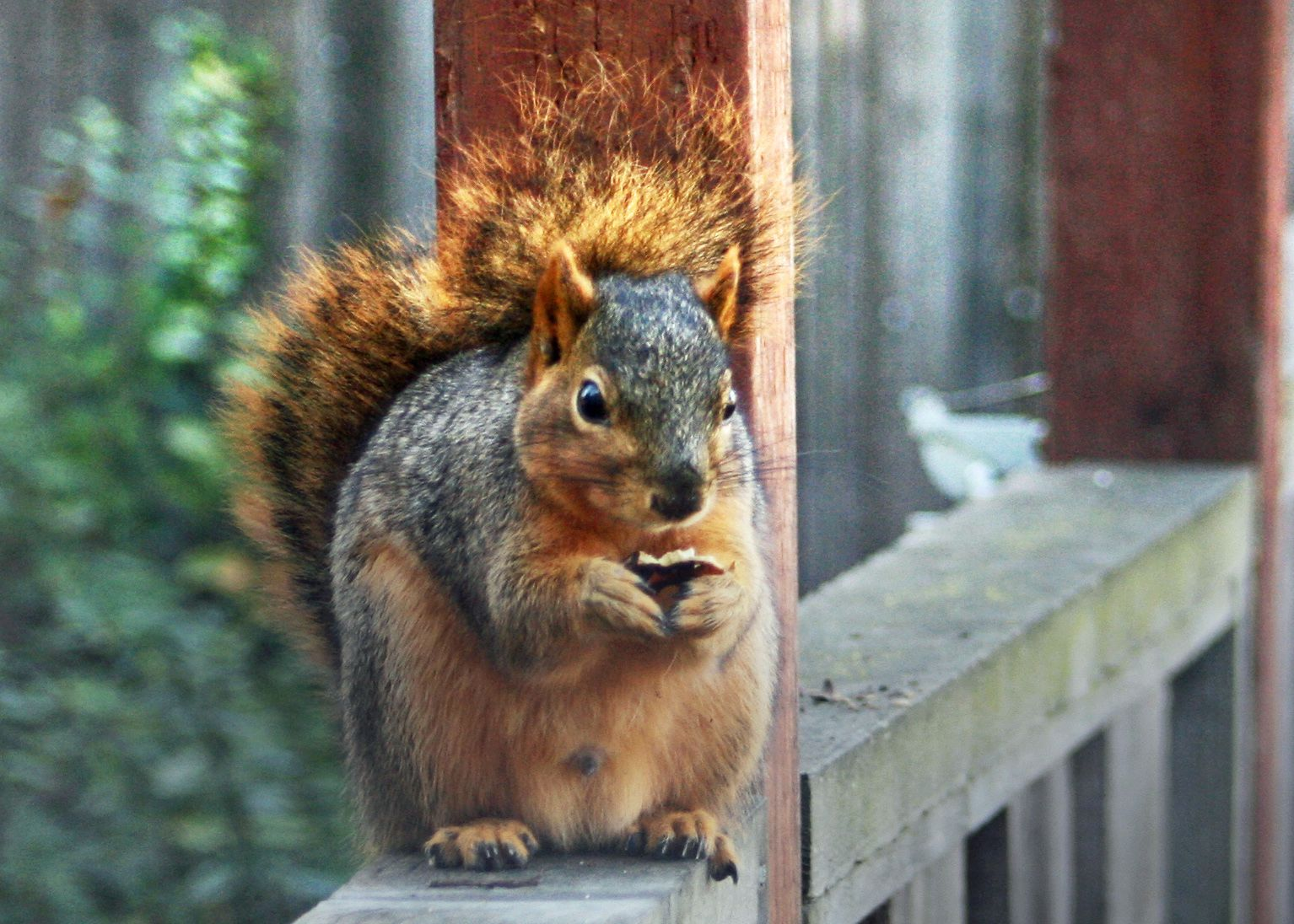 Reader has simply had his fill of them, but can you really fault a squirrel for being a squirrel?