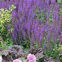 Den garten pflegeleicht gestalten tr umerei die natur for Garten pflegeleicht angelegt