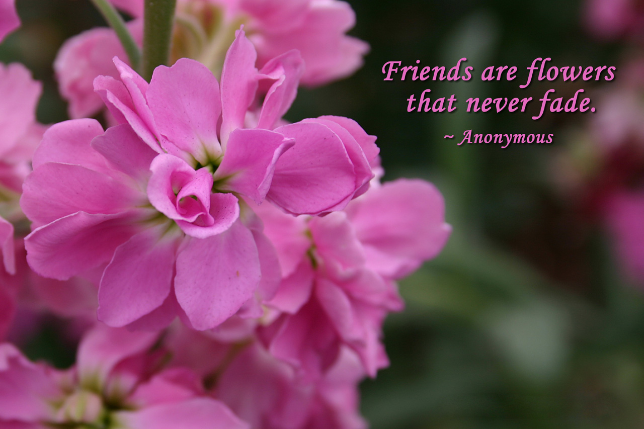 Friends are Flowers !! Flower quotes, Friendship quotes