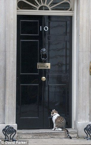 Heron Flies Into Number 10 And Perches On The Pm S Front Door Cat Work Cats Pictures Of The Week