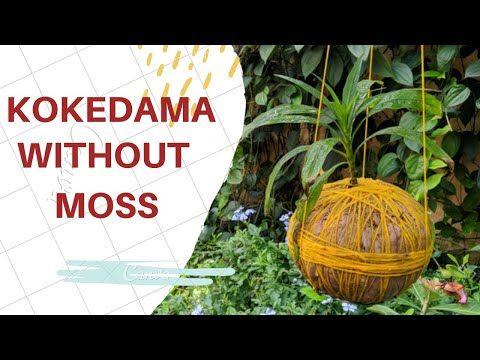 KOKEDAMA WITHOUT MOSS | കൊകെഡാമ | kokedama tutorial - YouTube