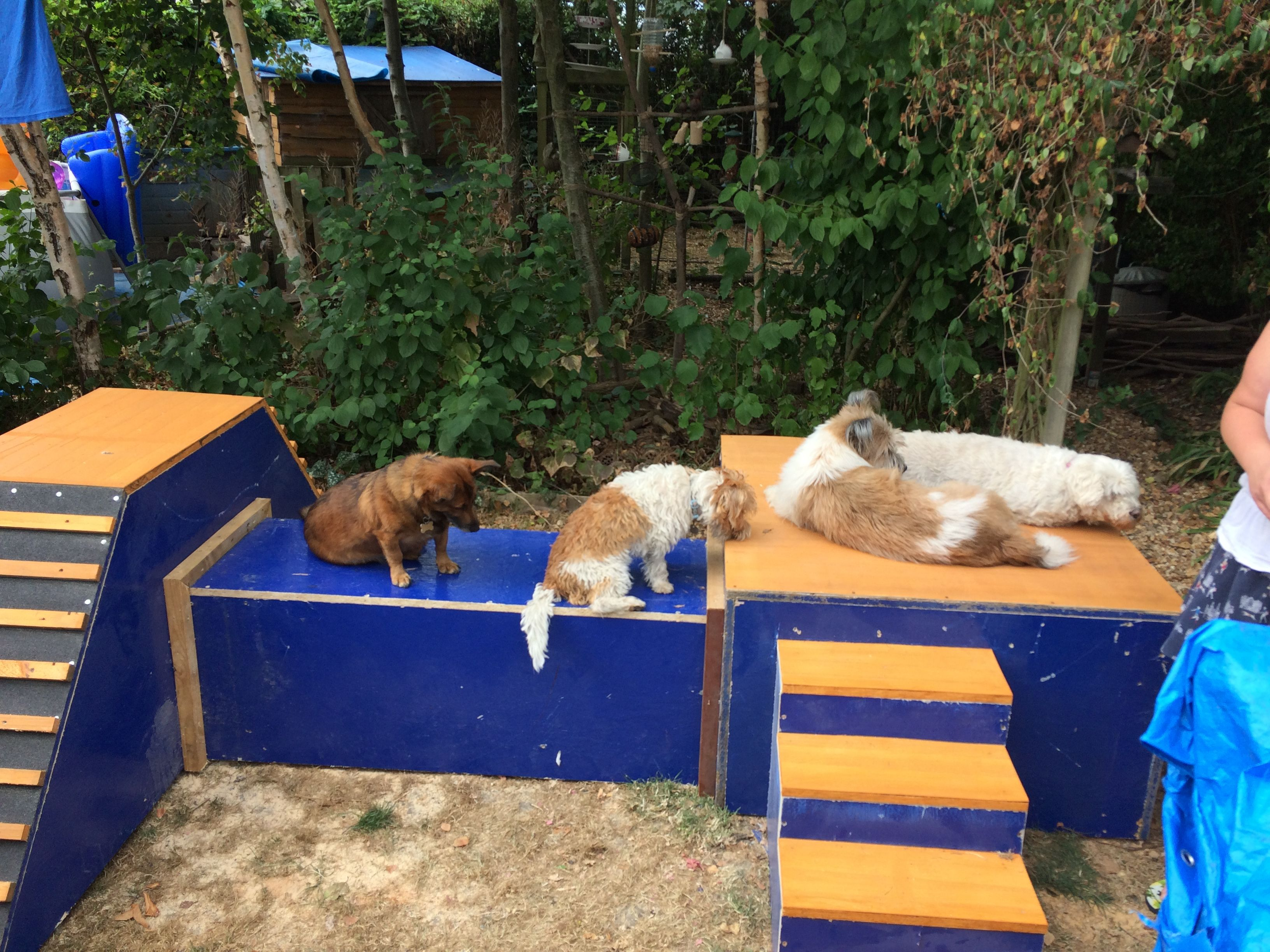 Our Diy Dog Playground Dog Playground Diy Dog Stuff Dog Area Diy backyard dog playground