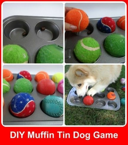 Brain Games To Challenge And Entertain Your Dog Diy Hide Treats