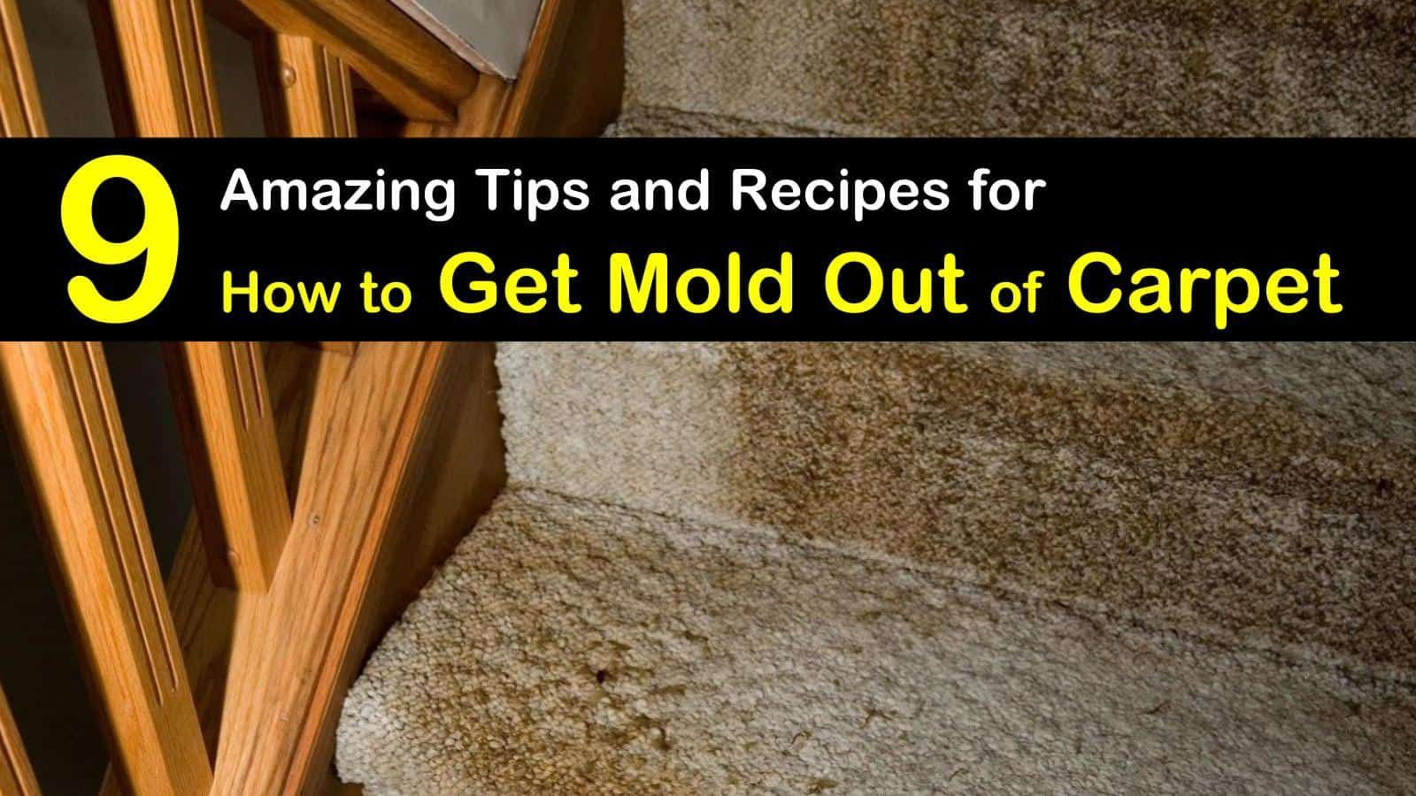 Pin On Carpet Stain Remover