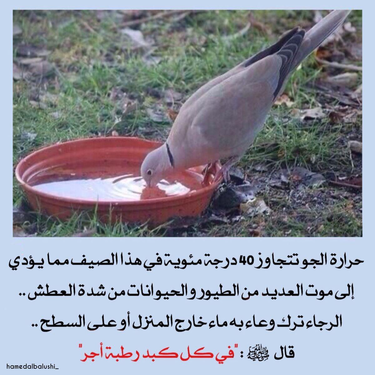 في كل كبد Garden Tools Arabic Quotes Animals