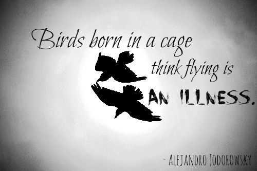 Quotes About Birds Flying Away Quotesgram Bird Quotes Quotes About Birds Flying Inspirational Quotes