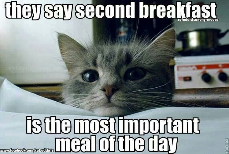 Wake up I'm hungry it's breakfast!   Cats, Funny cat memes ...