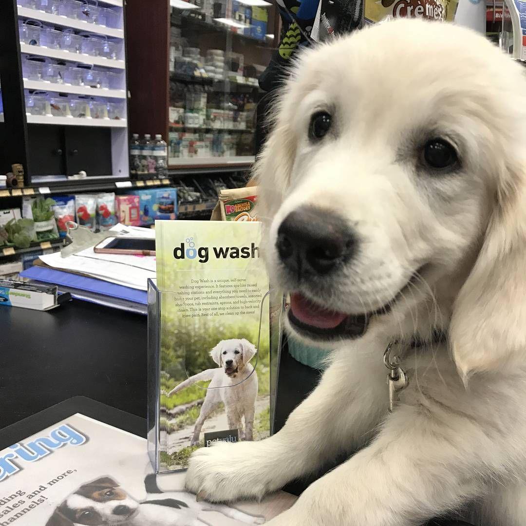 Cutecustomeralert Brody Found His Look Alike On The Dog Wash Brochure Pet Valu Dog Wash Pets Dogs