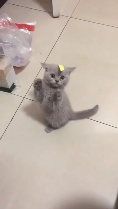 Kitten Is Confused  Cute Kitten Is Confused by its owners prank