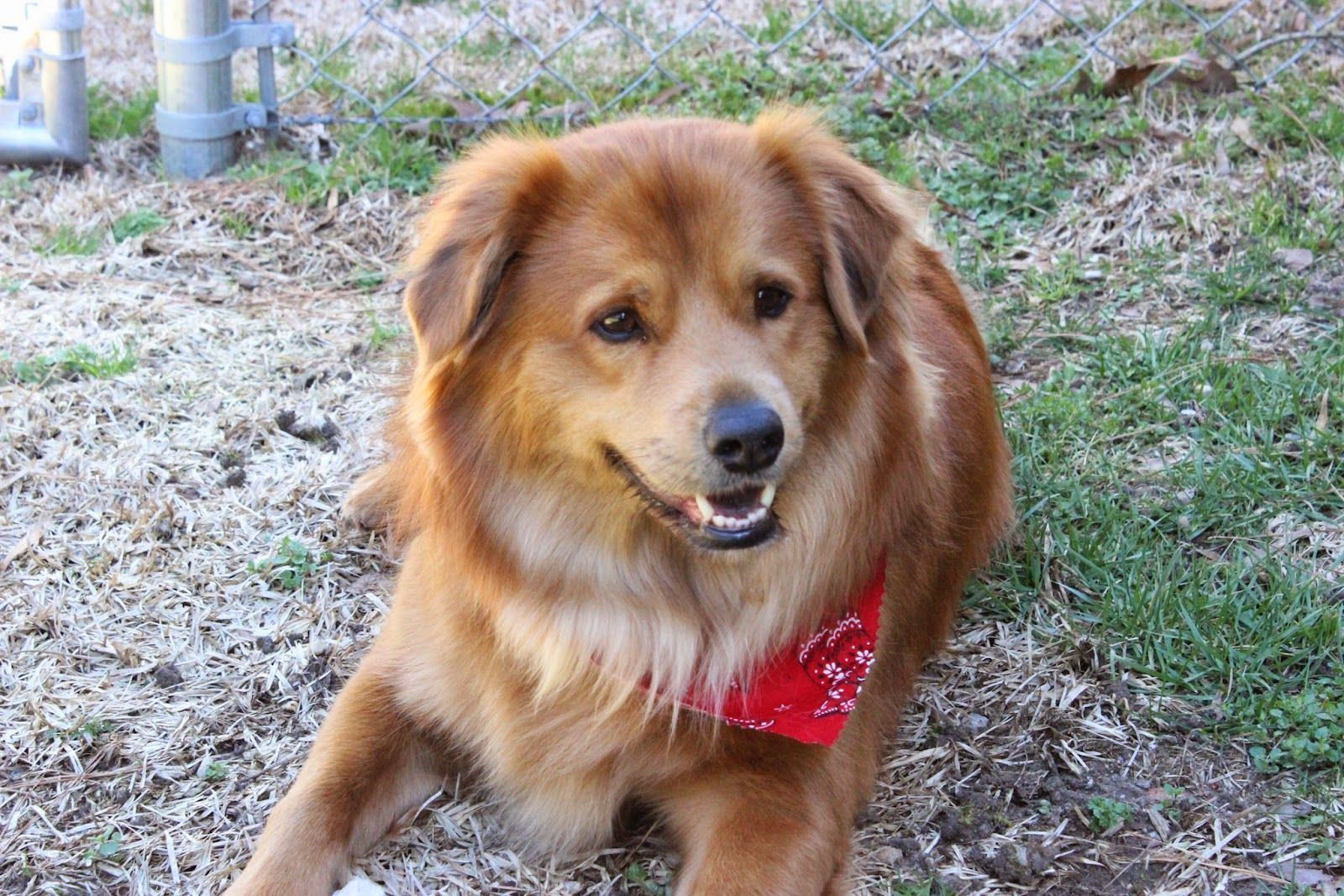Theo is an extraordinary pet- find out why! http://pawsforreaction.blogspot.ca/2014/03/extraordinary-pet-theo.html
